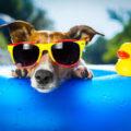 Highest temperatures could hit 33C